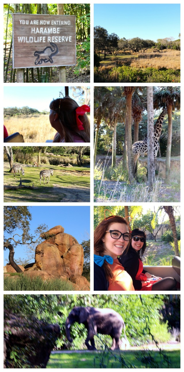from-asia-to-africa-and-back-again-animal-kingdom-harambe-wildlife-reserve