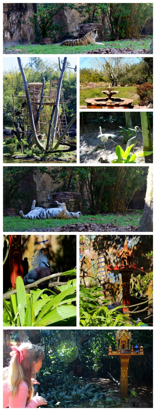 from-asia-to-africa-and-back-again-animal-kingdom-jungle-trek